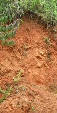 Soil profile in a trail cut. Coto Brus, Costa Rica, 7-17-06 - natasha