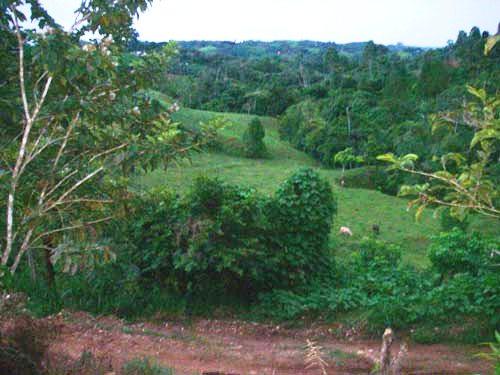 Out the front door, Coto Brus, Costa Rica, 6-25-06. � natasha